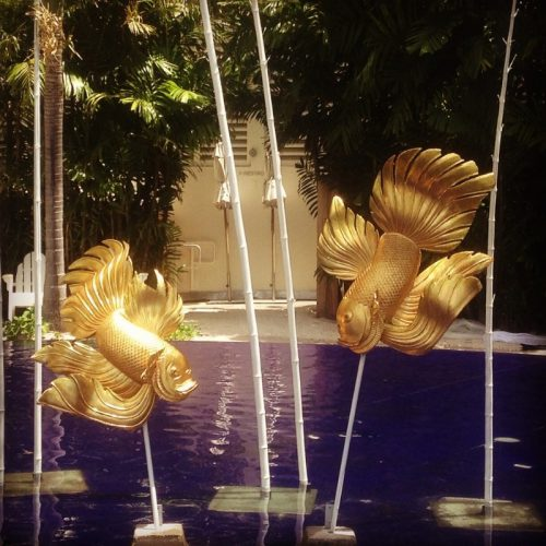 Large gold goldfish
